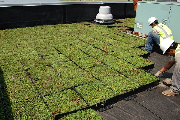 Green roofs 0